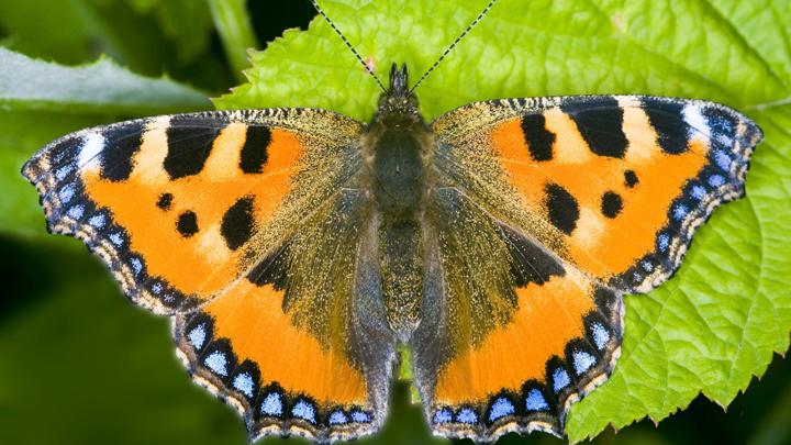 ЗОЖ, бабочки, взлом сейфов и беседы с воробьями: Необычные хобби гениев