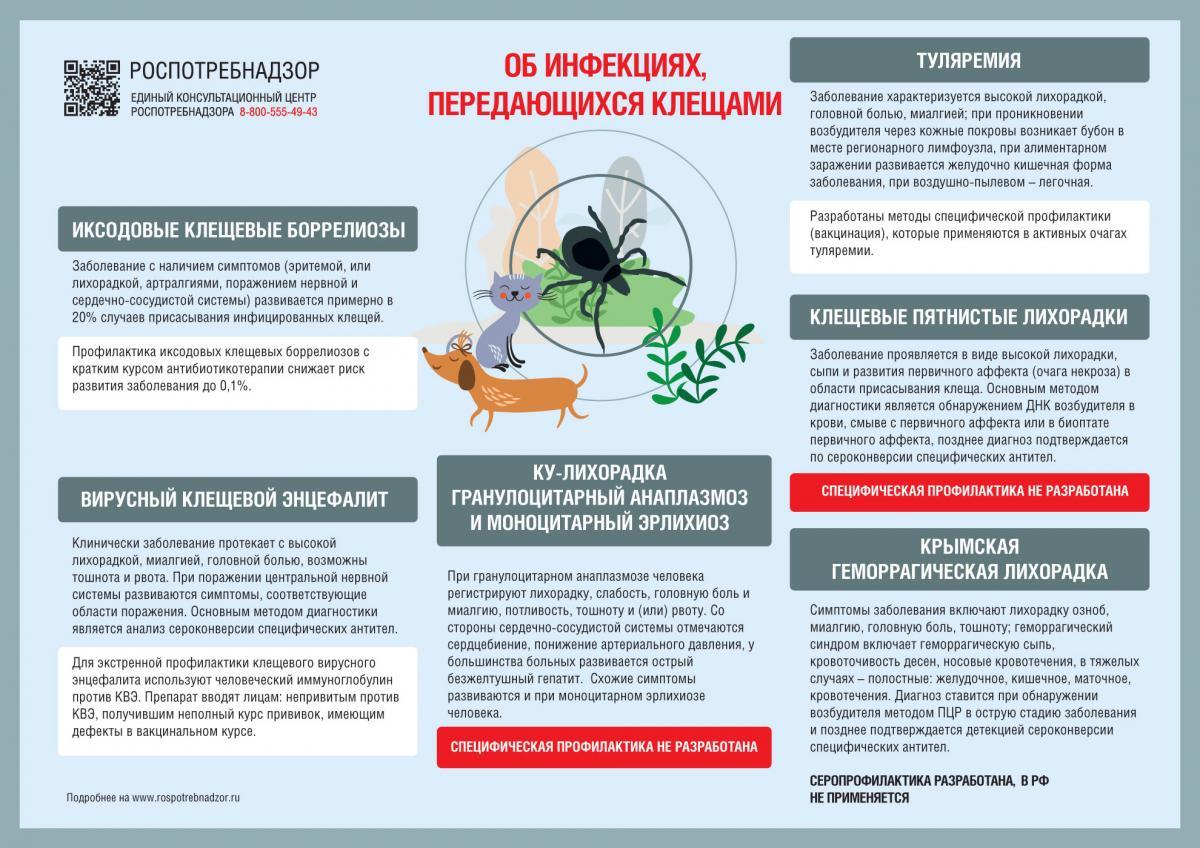 Инструкция: что делать, если укусил клещ в Нижегородской области