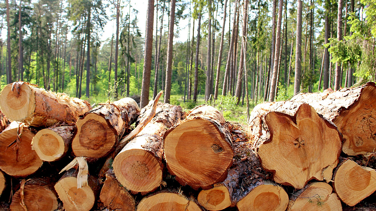 лес вырубка