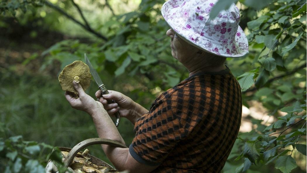 Госдума вводит налог на сбор грибов