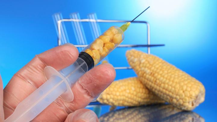 Новый ГМО на нашем столе. В России официально разрешено есть больше химикатов