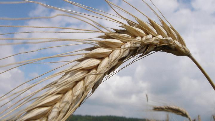 Затянем пояса – накормим заграницу