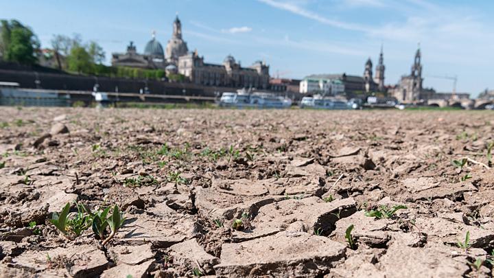 Эксперты бьют тревогу: Нас ждёт засуха и полчища саранчи
