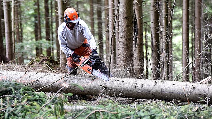 Русского леса скоро не будет: О чём молчит Счётная палата