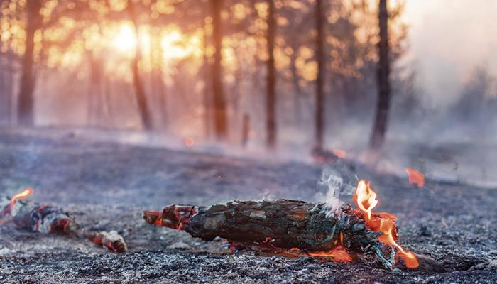 Родные пепелища: «Нотр-Дам» в Забайкалье
