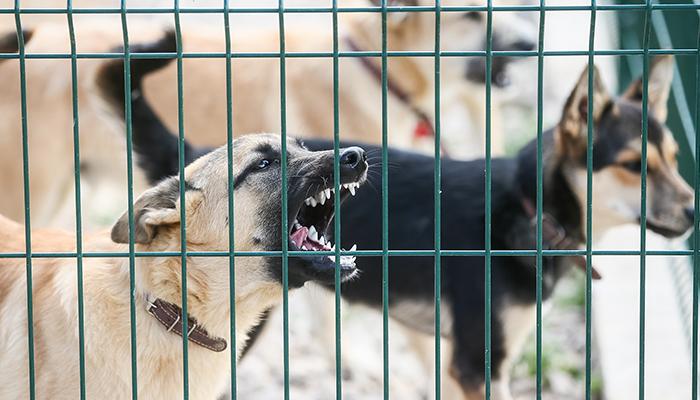 Как убрать собаку в домашних условиях