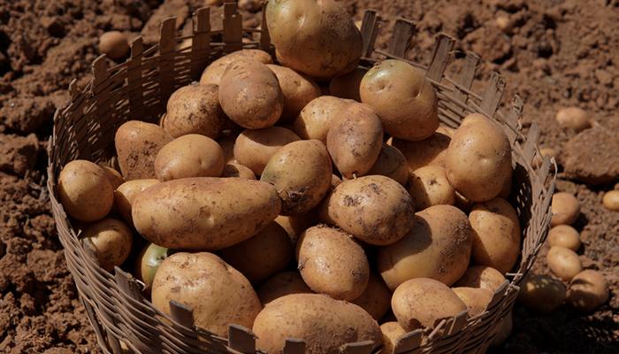 Осторожно, яд: Чем опасны овощи и фрукты