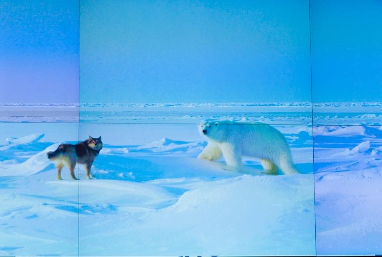 Собака Лиска и белый медведь